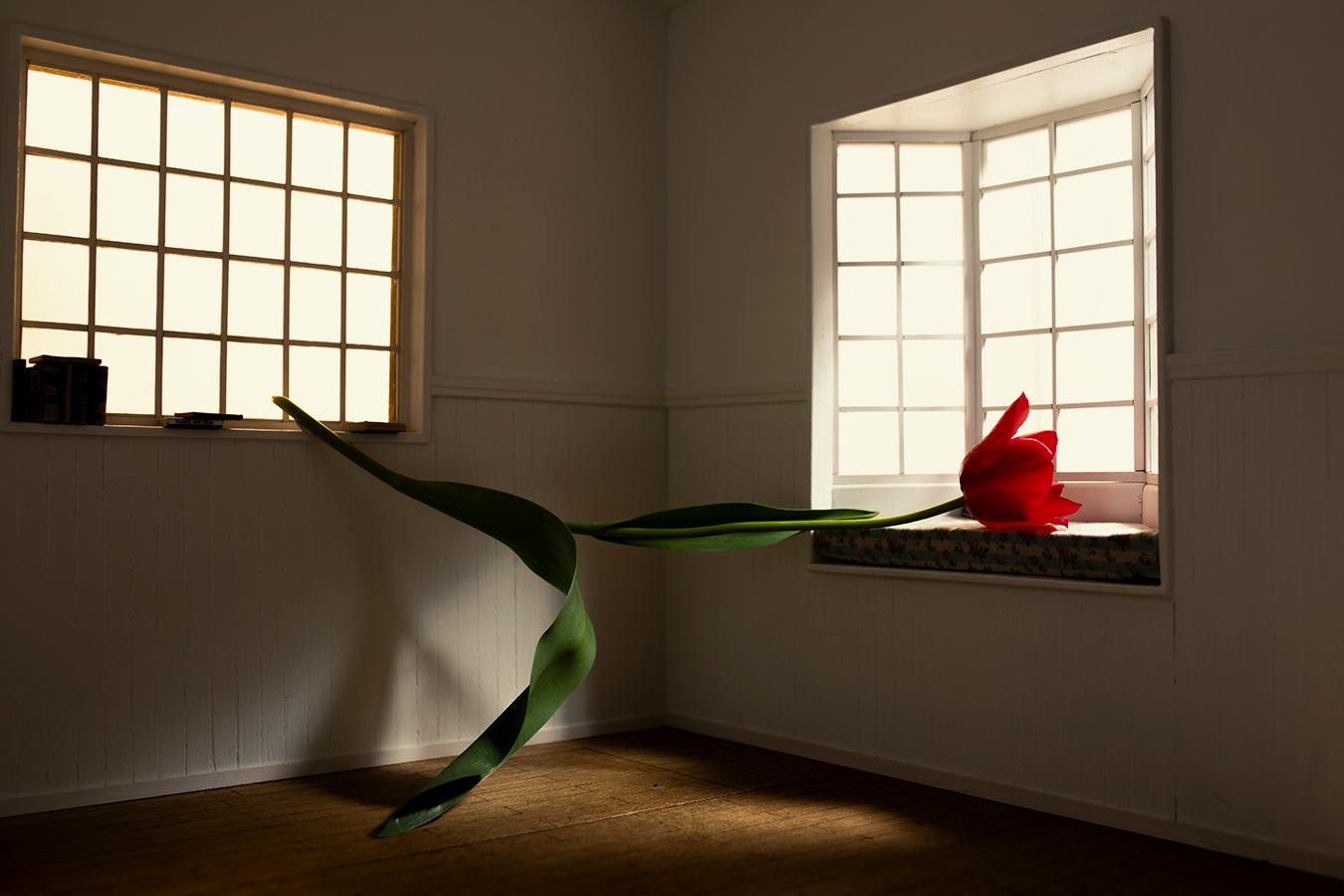 _P9A2437-fiore-giorno13a