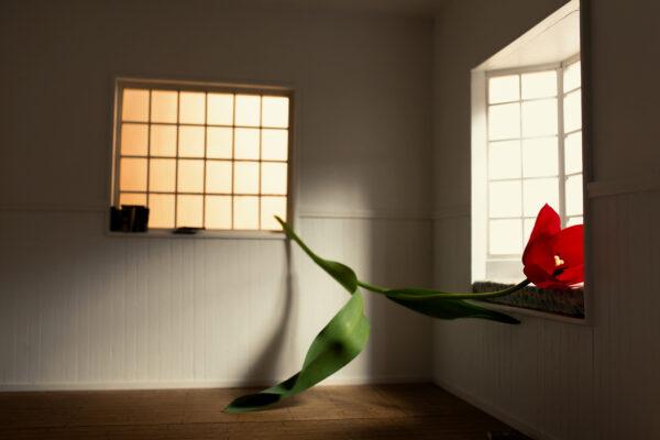 _P9A2445-fiore-giorno13